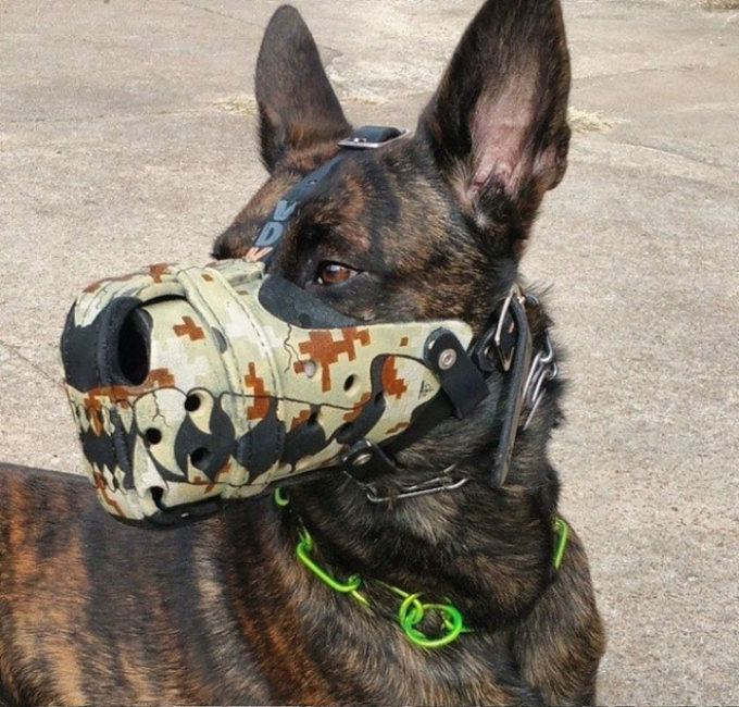 Where To Buy E Collar For Dogs