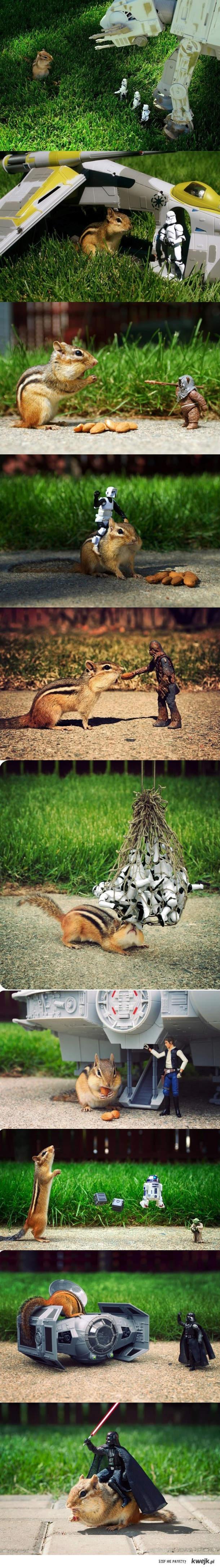 Niezwykłe przygody wiewiórki