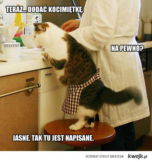 Gotowanie z kotem