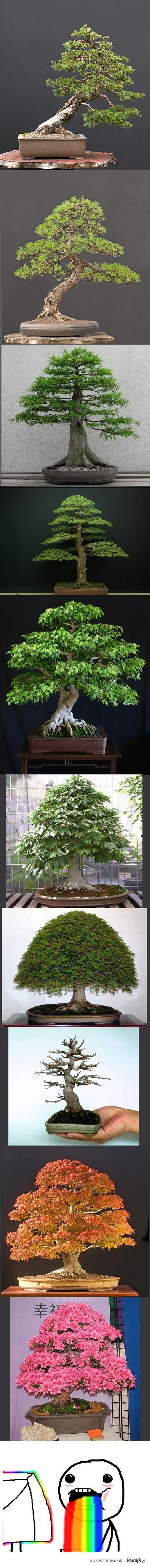Drzewka bonsai kompilacja