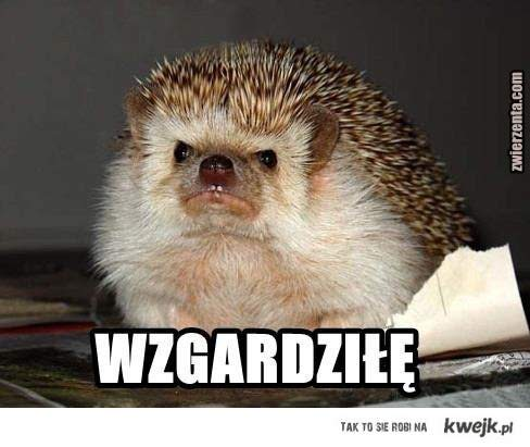 wzgardzil