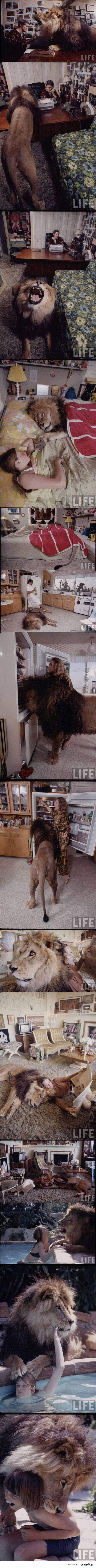 zwierzątko domowe :)