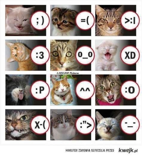Kocie emotki