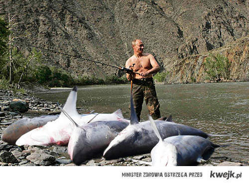 Samiec Alfa lvl: Putin