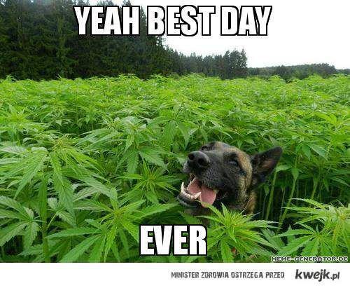 Najlepszy dzień na świecie