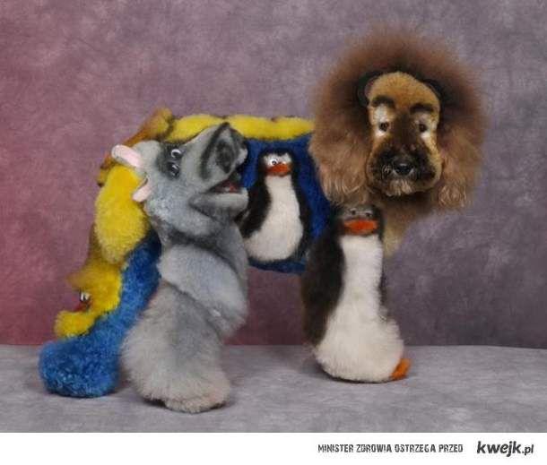 Ekstremalne fryzury dla zwierząt