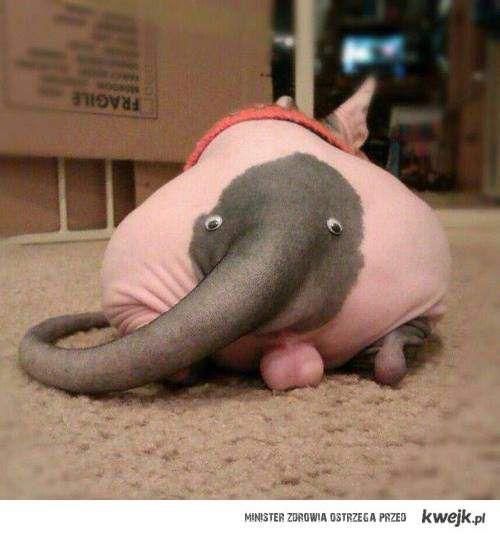 Słoń trąbalski
