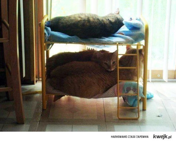 Kocie łóżeczko
