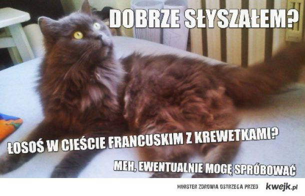Kot Tadziu