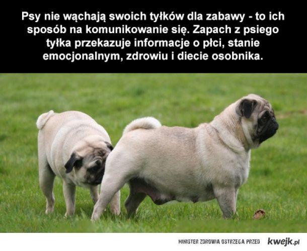 Dlaczego psy wąchają tyłki?