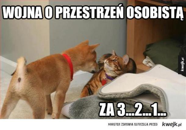 Pieseł vs koteł