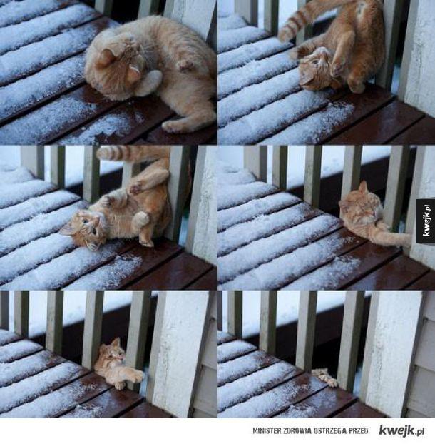 Kot który pożałował śmieszków