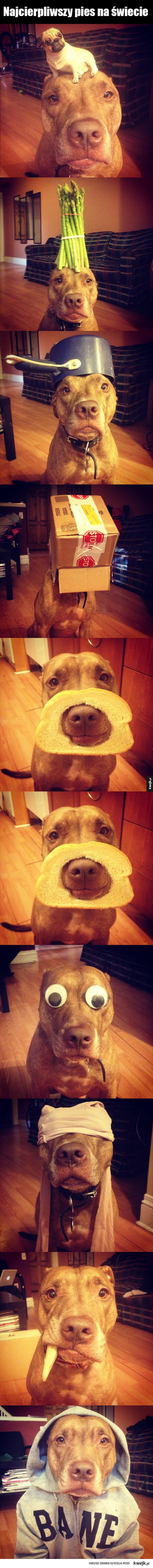 Najcierpliwszy pies na świecie