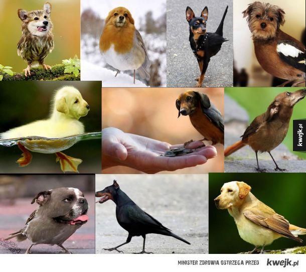 Psy z ciałami ptaków