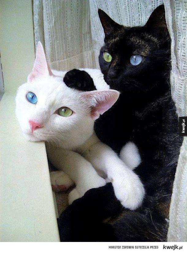 Piękne koty