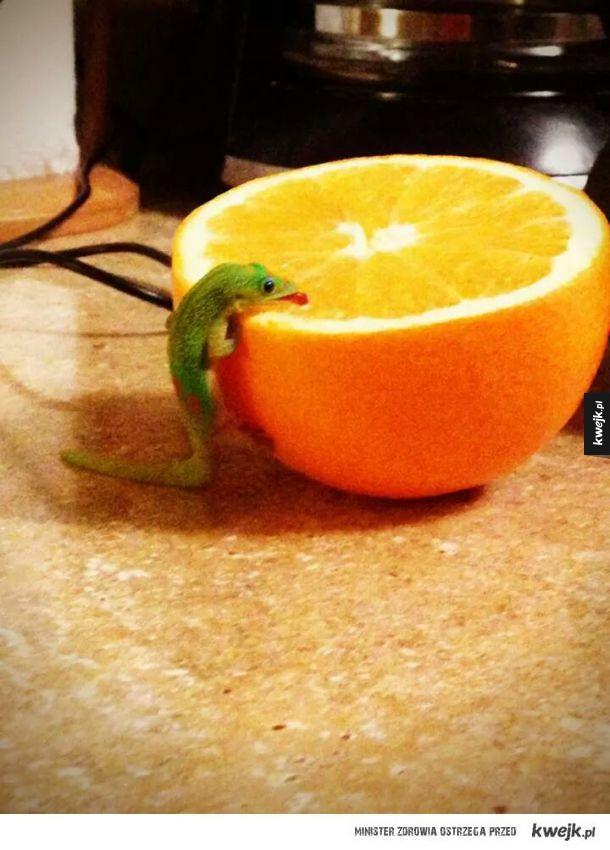 Ten mały kocha pomarańcze!