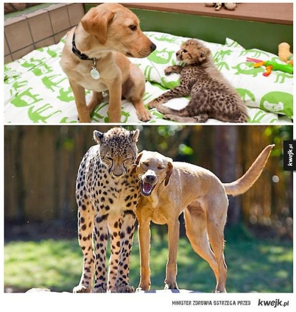 Najlepsi przyjaciele na cale życie :)