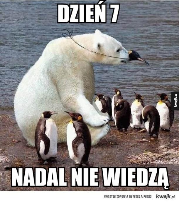 Pingwiny mi zaufały