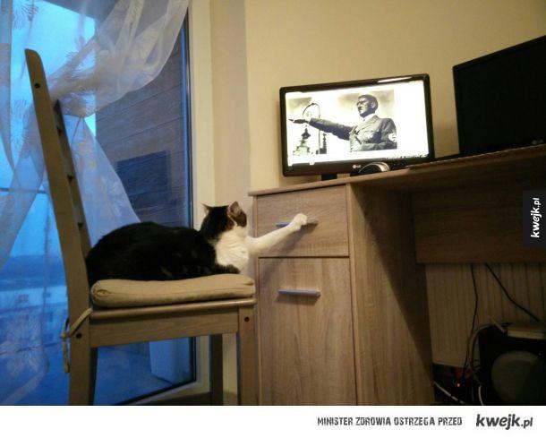 Gdy na chwilę zostawisz kota samego...