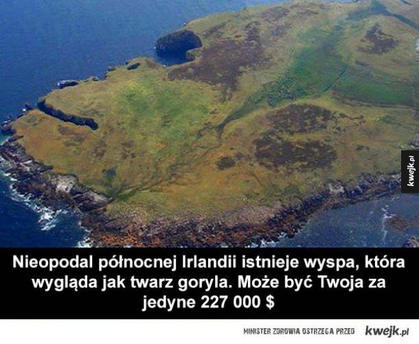Goryla wyspa