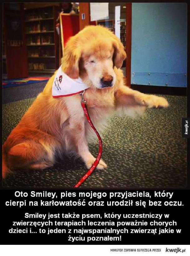 Pies Smiley