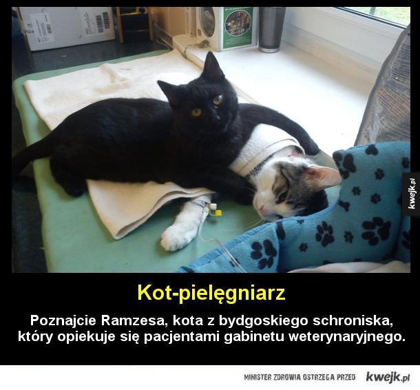 Kot, który pomaga w leczeniu