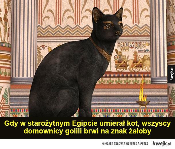 Wierni przyjaciele - Gdy w starożytnym Egipcie umierał kot, wszyscy domownicy golili brwi na znak żałoby