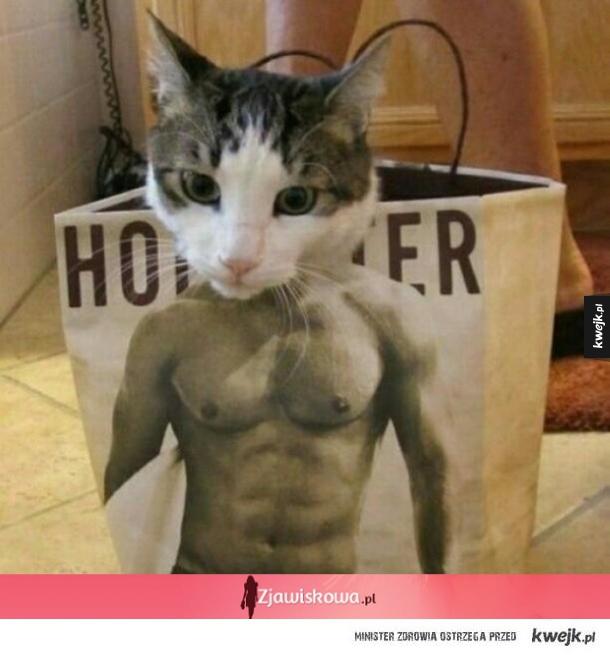 Koteł idzie ci wpierdolić