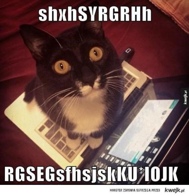 Kot na klawie