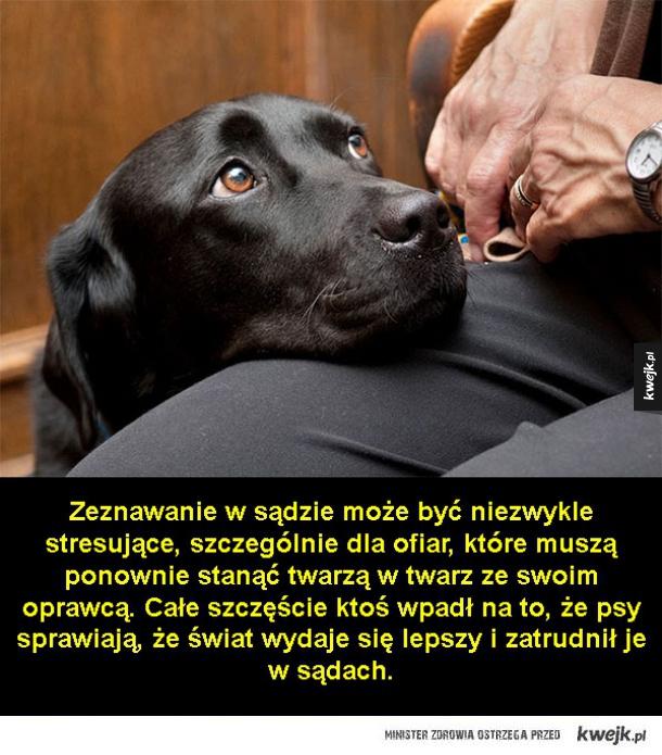Pies pomocnik sądowy