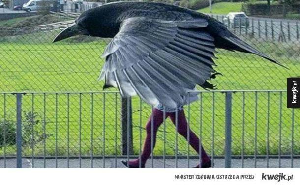 Ptasie photobomby