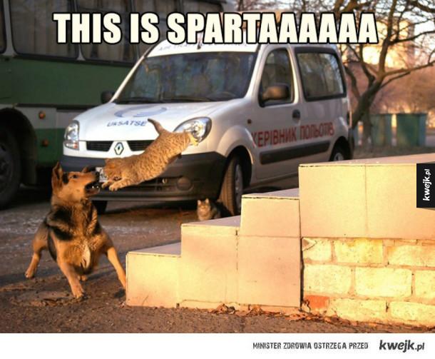 spartaaaa