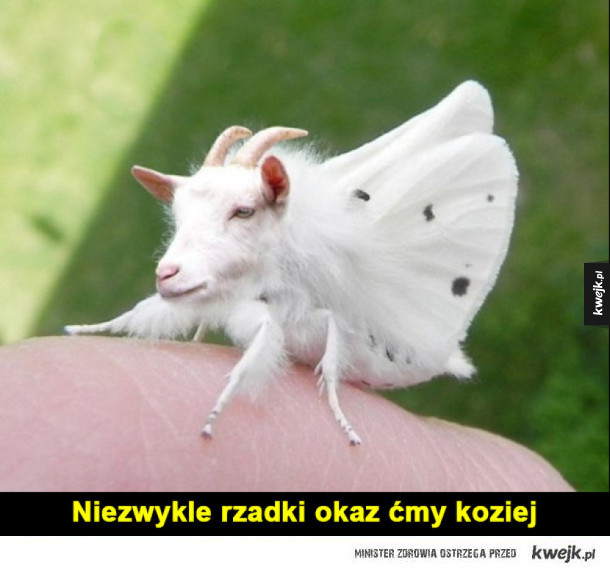 ćmoza