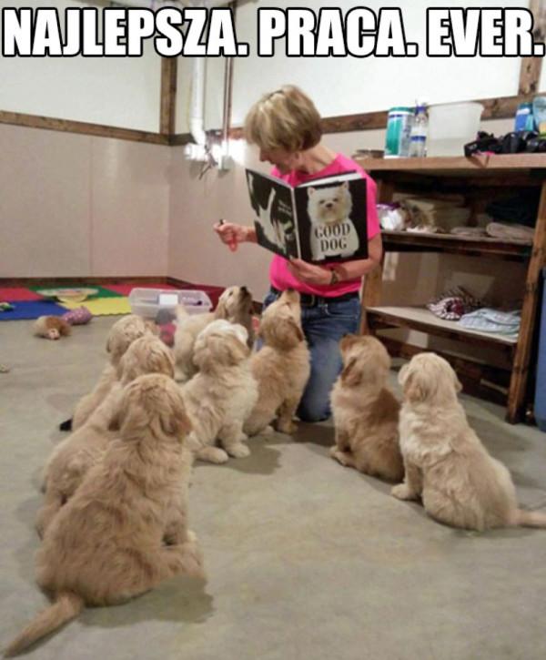 szkoła dla szczeniaczków