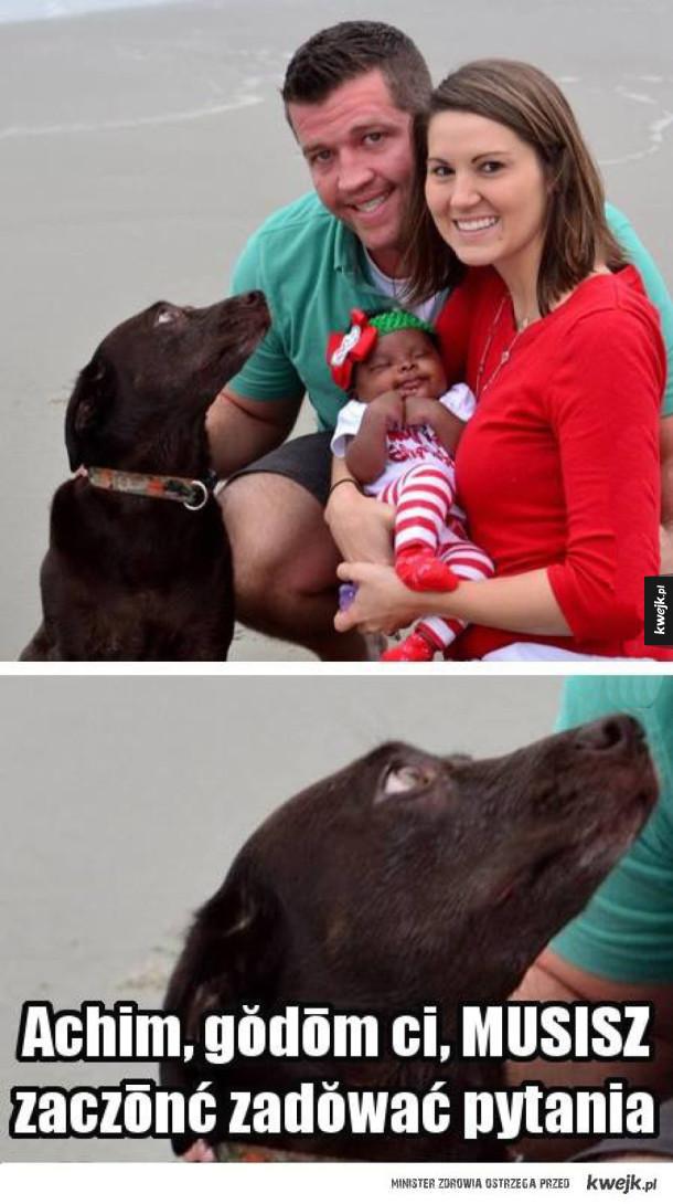 Pies wie co mówi