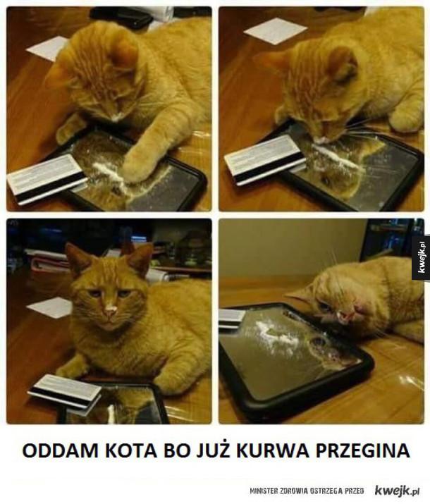 Kotełeł