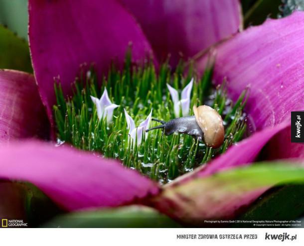 Niektóre zdjęcia z konkursu 2016 National Geographic Nature Photographer Of The Year