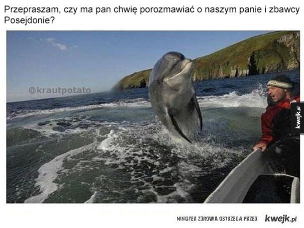 Bezczelne te delfiny