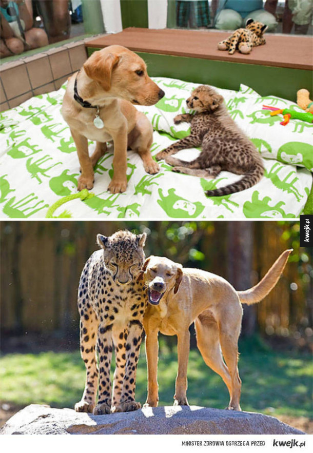 Wspaniałe zwierzęce przyjaźnie