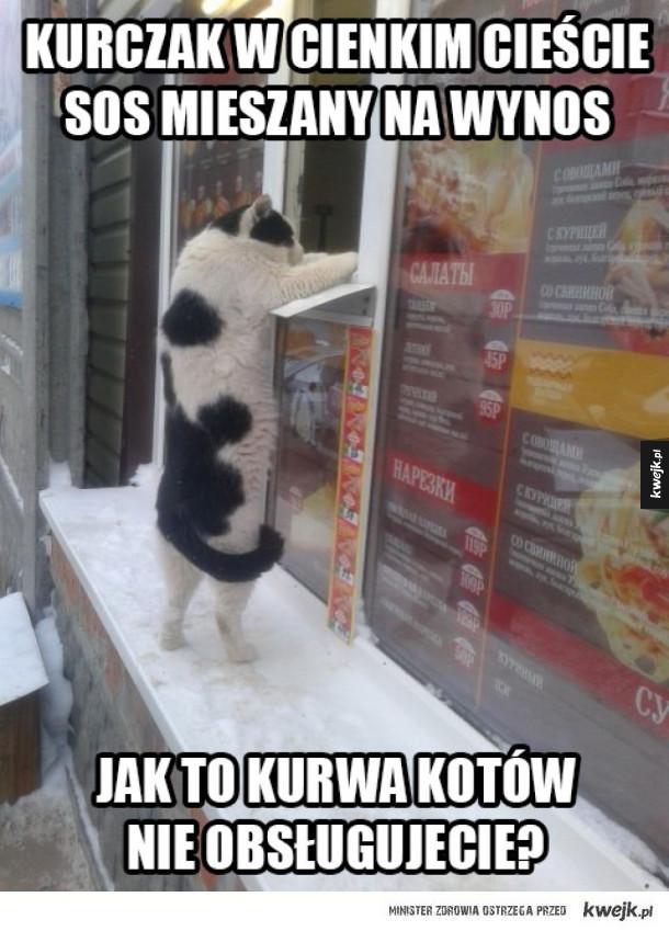 Dyskryminacja kotów