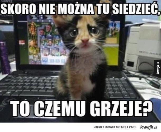 Kotek siedzi na laptopie