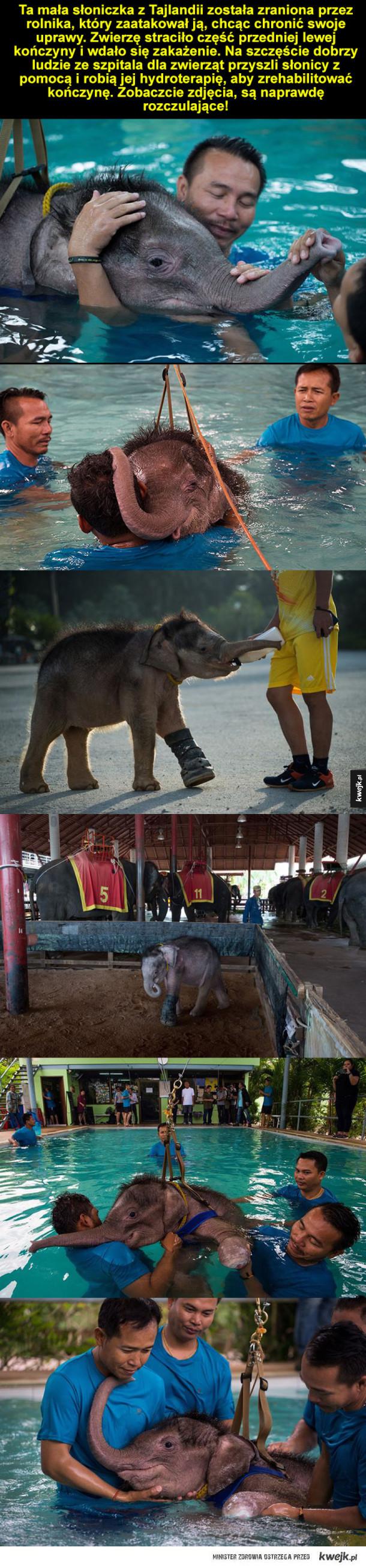 Hydroterapia dla słonia