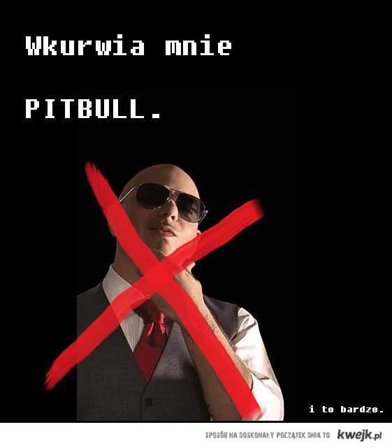 Wkurwia mnie Pitbull