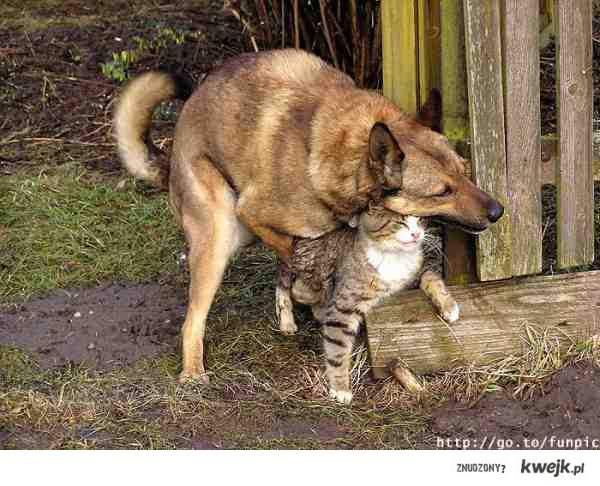 żyć jak pies z kotem nabiera nowego znaczenia