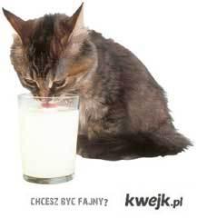 nie dla kotka mleczko