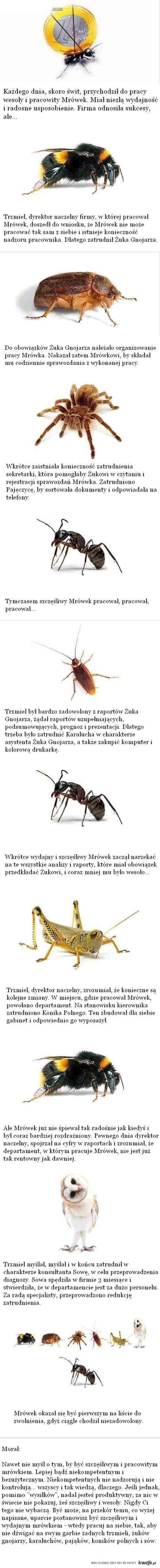Mrówek