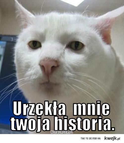 Kot którego urzekła twoja historia