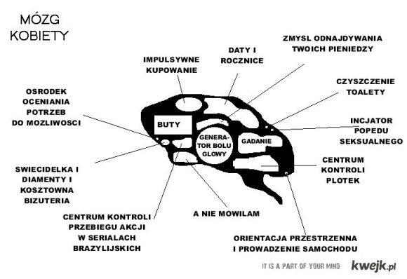 Mozg kobiety