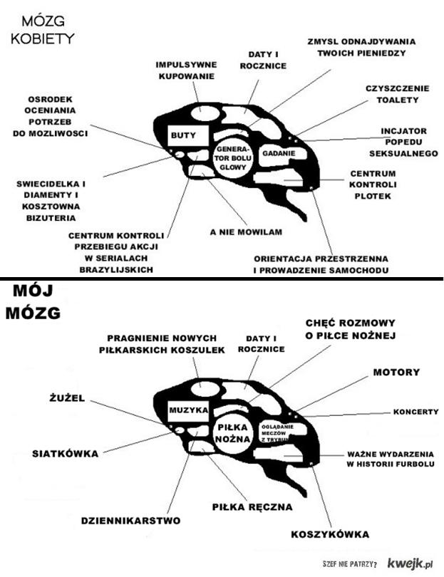 stereotypowy mózg kobiety vs mój mózg