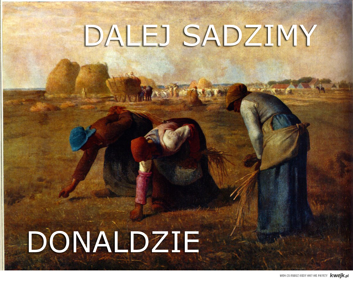 Sadzimy